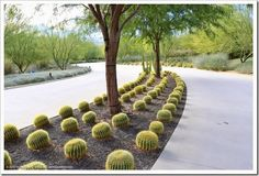 Succulents and More: Sunnylands Center and Gardens, Palm Springs, CA
