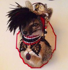 Ursula Urocyon - Ethically sourced anthropomorphic rogue taxidermy grey fox