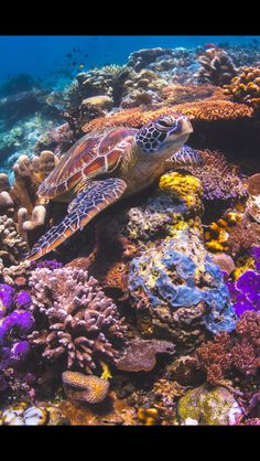 Turtle wurtle on a coral reef