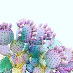 Good morning purple cacti! loving AZ in the summer is very difficult... But the desert can be pretty