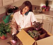 Tips for moving houseplants.  Gotta keep my plant babies alive!