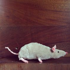 phoebe-bird:   mousemaker mousemaker make me a mouse