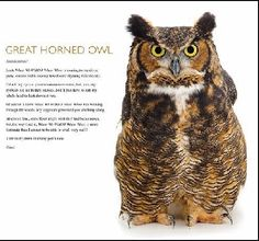 owl fact sheets for kids - Google Search