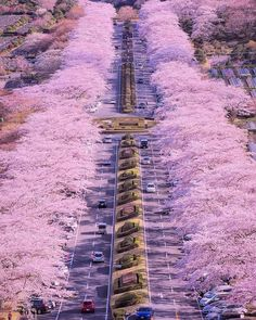 Cherry blossom line ~ Shizuoka, Japan Photo: Congrats! 😍 ➡ Founders: ⬅ Tag your favourite person! Photo Japon, Japan Photo, Amazing Photography, Nature Photography, Canon Photography, Landscape Photography, Travel Photography, Bol D Air, Cherry Blossom Japan