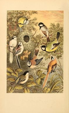 n5_w1150 by BioDivLibrary, via Flickr
