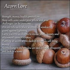 Image may contain: food Mabon, Kitchen Witchery, Herbal Magic, Magic Herbs, The Good Witch, Baby Witch, Witch Spell, Wiccan Spells, Back To Nature