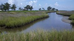 A view at Portsmouth Village.  This is an NPS site and an abandoned town on the NC coast.  Easily accessible from Ocracoke Island, NC, and a wonderful day trip.  Photo by Dawn Branch King, 2013.