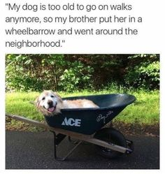 Animal Quotes, Animal Memes, Dog Memes, Wheelbarrow, Alter, The Neighbourhood, Funny Pictures, Lol, Cats