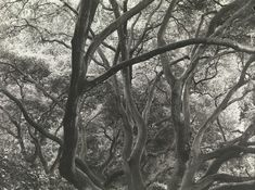 View Under the Oaks, 1163 Euclid Avenue, Berkeley, California - By Dorothea Lange; Access more artwork lots and estimated & realized auction prices on MutualArt. Berkeley California, Film Studies, Popular Photography, Gelatin Silver Print, List Of Artists, Documentary Photographers, Word Pictures, Film Stills, Life Magazine