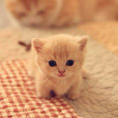 So tiny and cute!