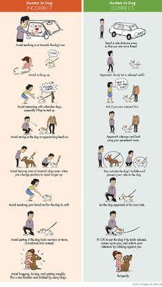 Correct Way to Greet a Dog (Lili Chin)