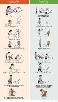Correct Way to Greet a Dog (Lili Chin)