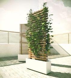 Mobile Vine Wall to Block Neighbour #gardenvinestrellis