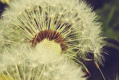 cerezah.de «: Photography {Makro²...