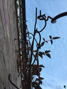 Aspects of wild trellis by Lorraine Philpot, Firle Forge. Clematis Van Gogh.