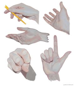 """hand studies"" by Jiayue Wu Anatomy Sketches, Anatomy Drawing, Anatomy Art, Art Sketches, Hand Anatomy, Hand Drawing Reference, Anatomy Reference, Art Reference Poses, Digital Painting Tutorials"