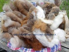 gulf coast native & alpaca for blend