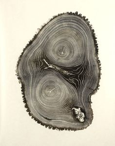 The Beautiful Complexity of Nature Bryan Nash Gill inspiration