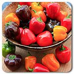 Bangles Mix Mini Bell Pepper - Adorable miniature sweet bell peppers, red, orange or chocolate colored, one color type per plant Perfect for skewers or stuffing 60 days  to green, 80 to color