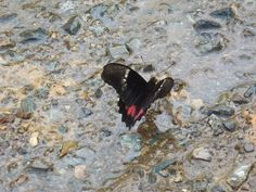 CostaRicaButterflyImage