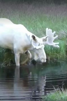 Pretty Animals, Super Cute Animals, Cute Little Animals, Cute Funny Animals, Animals Beautiful, Rare Albino Animals, Unusual Animals, Majestic Animals, Strange Animals