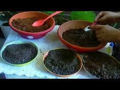 Organic Fertilizer, I Care, Kos, Gardening Tips, The Creator, Plants, Medium, Youtube, Plant