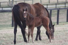 Look at the muscle on this colt at just 3 weeks old! He's by KY Derby winner Street Sense.