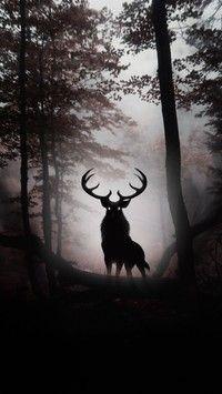 Samotny jeleń w ciemnym lesie