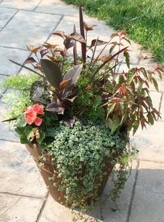 One of my favorites -- the bronze and coral colors mimic the color of the bronze container. Plants include rubber tree plant, asparagus fern, spike, begonia and baby's tears.
