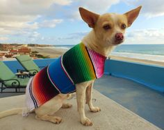 Dog clothes as unique as your dog....  One of a Kind: Each poncho is beautifully hand-sewn from hand-woven serape blankets straight from Guadalajara,