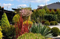 Największe w Polsce forum o budowaniu i zyciu. To kopalnia wiadomości o budowie, instalacjach, remontach, urządzaniu i aranżacji wnę™trz. To miejsce służące wymianie doświadczeń, opinii i poglądów. To także kwitnące życie społeczności. Garden Inspiration, Organic Gardening, Curb Appeal, Flora, Home And Garden, Plants, Front Courtyard, Plant, Organic Farming