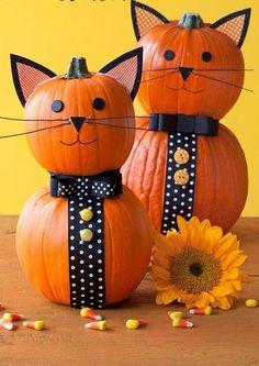 Kitty Pumpkins!