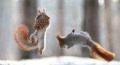 Bizarre,+vous+avez+dit+bizarre-Ces ecureuils ont trop regarder Matrix.