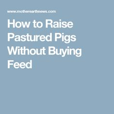 How to Raise Pastured Pigs Without Buying Feed