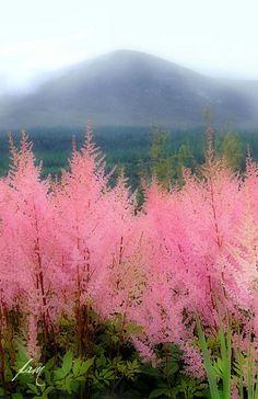 Arboles pink