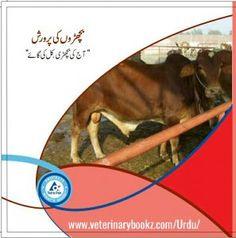 Making A Business Plan, Goat Farming, Dairy Form, Good Books, Pdf, Cattle, Free, Gado Gado, Great Books