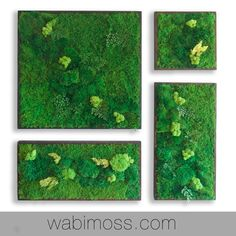 Real Preserved Moss Wall Art Green Wall Collage No Sticks. No care green wall art. Real preserved moss and ferns - WabiMoss Moss Wall Art, Moss Art, Green Wall Decor, Green Wall Art, Reclaimed Wood Frames, Moss Garden, Plant Painting, Plant Wall, Plant Decor