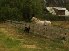 Kel meets a horse