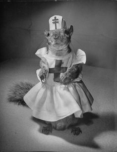 "In the early 1940s, LIFE magazine reported that a Mrs. Mark Bullis of Washington, D.C., had adopted a squirrel ""before his eyes were open, when his mother died and left him in a tree"" in the Bullis's back yard. In a series of photos by Nina Leen, LIFE chronicled the quiet, rodential adventures and sartorial splendor of Tommy Tucker, the orphaned - and, in 1940s America, the celebrated - squirrel. S)"