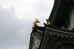 https://flic.kr/p/z1Lpmc | 멋진 금색 : gold color | 비가 오고 난 후에 보니 또 다른 금색느낌이 새로운 감흥을 알려줍니다.
