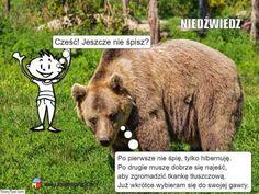 Brown Bear, Animals, Youtube, Animales, Animaux, Animal, Animais, Youtubers, Youtube Movies
