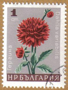 Bulgaria Bulgaria, Valley Of Flowers, Postage Stamp Art, Flower Stamp, Vintage Stamps, Stamp Collecting, Chrysanthemum, Totoro, Wallpaper