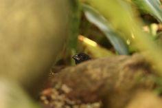 I see you by Attila Molnar on YouPic See You, Birds, Attila, Bird