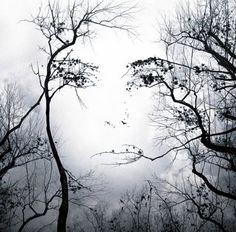 Resultado de imagen para rostro en el arbol