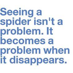 Stupid spiders.
