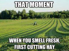 Fresh cut hay