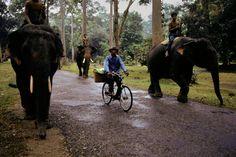 The World's Ride, Angkor Wat, Cambodia  | Steve McCurry