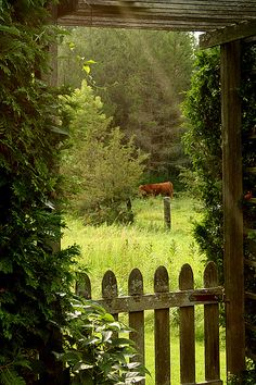 Vermont ~ view of a meadow through this old country garden gate