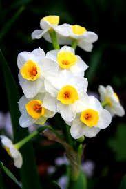 Resultado de imagen para georges de la tour paintings of daffodils