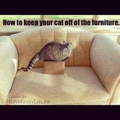 How to keep your cat off the furniture. https://www.facebook.com/89811673029/photos/a.92438463029.89954.89811673029/10152322811943030/?type=1